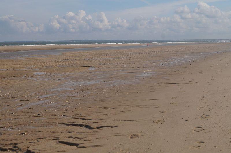 To, co oddał ocean :)
