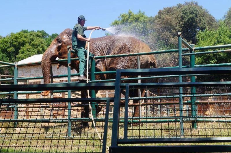 Poranna toaleta słonia naWyspach Briońskich