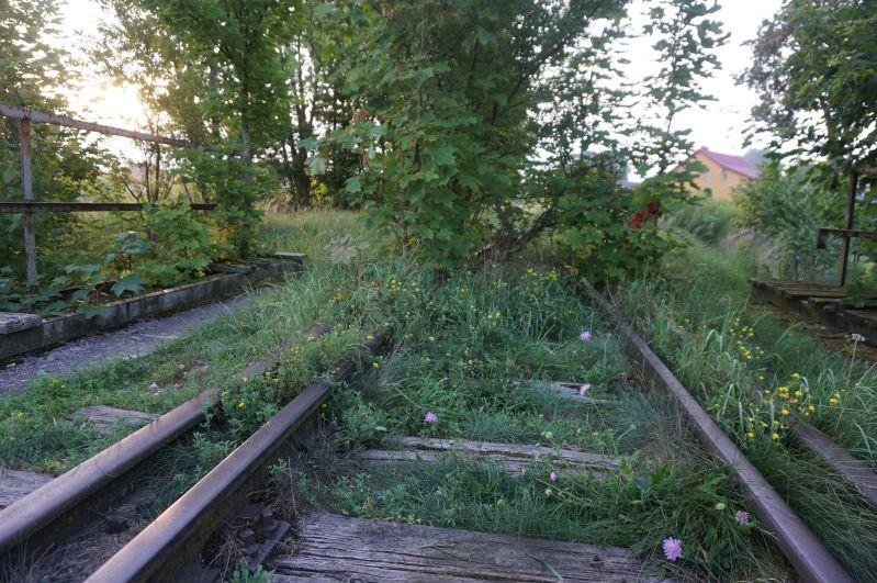 Zarośnięte tory zadworcem kolejowym wGołdapi