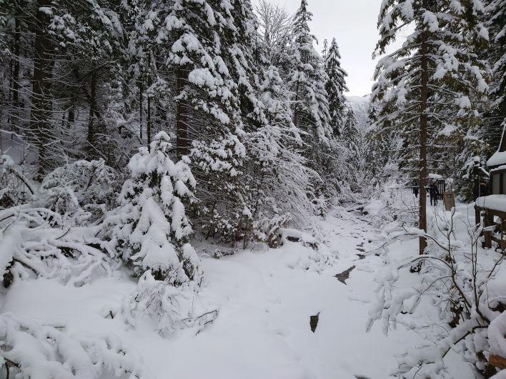 Dolina Białego wZakopanem zimą