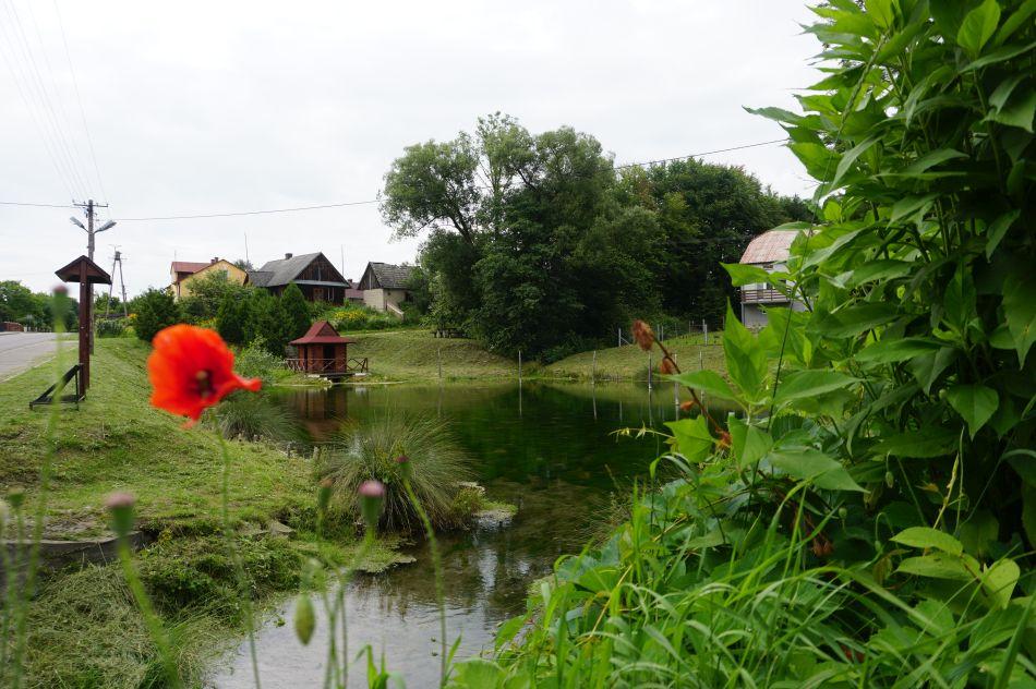 Susiec - źródła rzeki Krynica